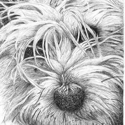 Tonal Westie Drawing