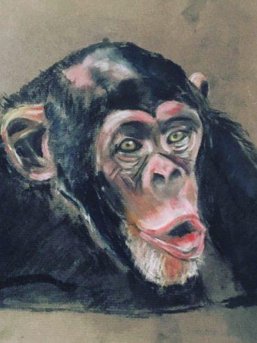 Pastel Chimp
