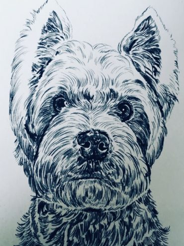 Westie Pen Drawing
