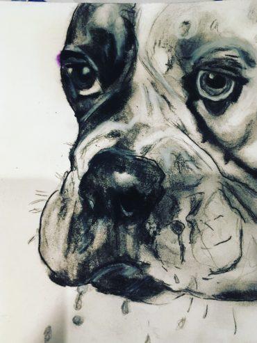 charcoal bull dog