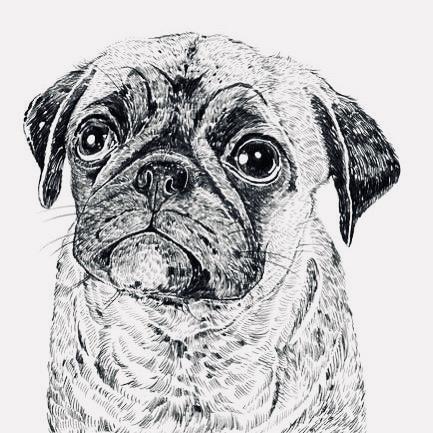 Pen Pug Drawing