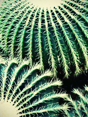 Round Cactus Heads